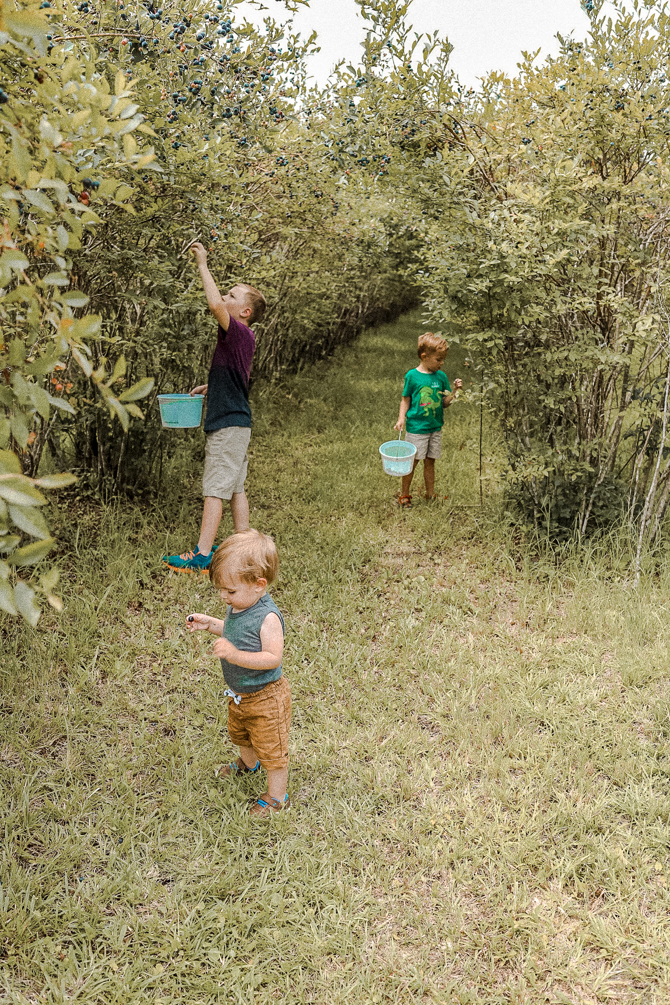 Organic Blueberry Picking in Georgetown
