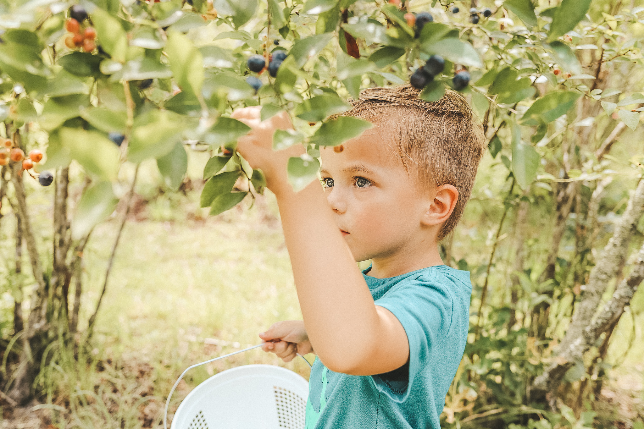 blueberry picking in Georgetown